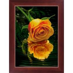Роза над водой