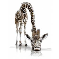Задумчивый жираф