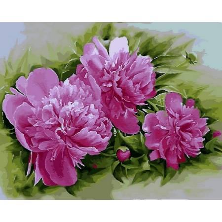 Картина по номерам Розовые пионы Q2184, Mariposa