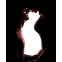 Домашние любимцы. Кошка