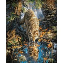 Волк на водопое