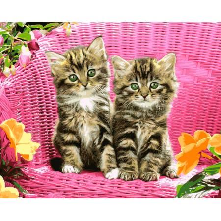 Картина по номерам «Зеленоглазые котята», модель VP932