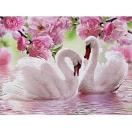 Лебеди в розовом