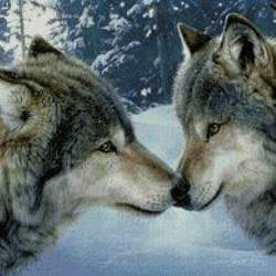 Волчья верность 2