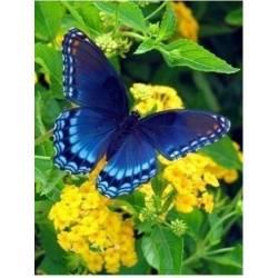 Бабочка отдыхает