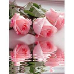 Отражение роз в воде