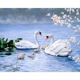 Благородные белые лебеди