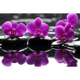 Изысканность орхидей