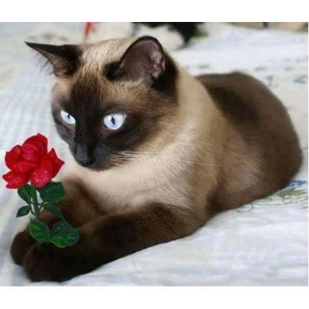 Картина по номерам Котик с цветком (FS640), DIY