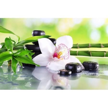 Алмазная вышивка - Бамбук и белая орхидея