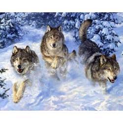 Стая волков в снегу