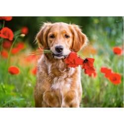 Самый верный друг собака