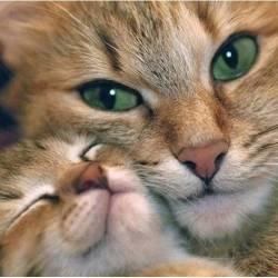Мама кошка и котенок
