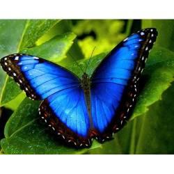 Бабочка Морфо на листочке