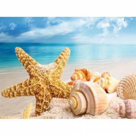 Пляж и ракушки