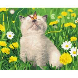 котенок с бабочкой