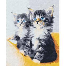 Голубоглазые котики