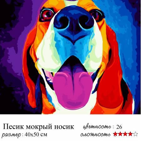 Пес мокрый нос