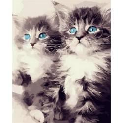 Голубоглазые котята