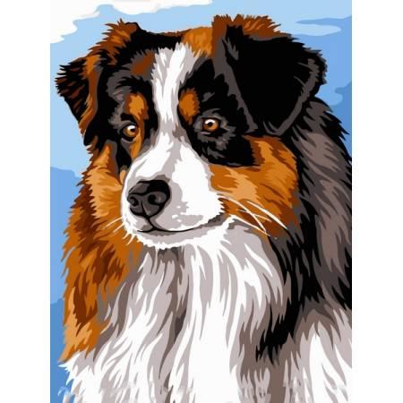 Картина по номерам Австралийская овчарка VK241, Babylon