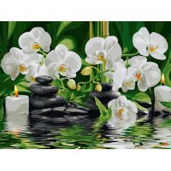 Нежные белые орхидеи