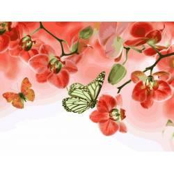Красные орхидеи