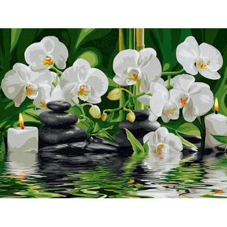Картина по номерам «Нежные белые орхидеи 40х50», модель VP534