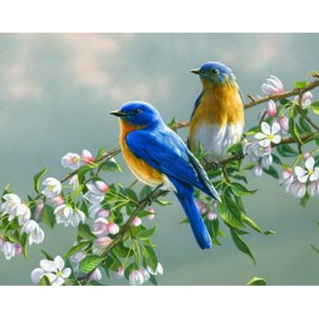 Картина по номерам «Птички на ветке яблони», модель Q809