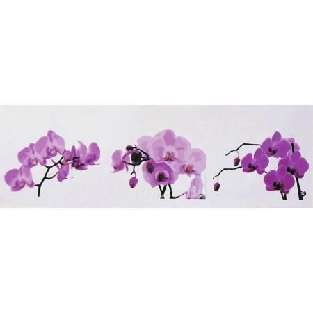 Картина по номерам Ветка орхидеи MS14081, Babylon