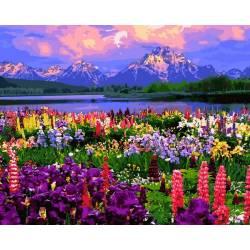 Поле из полевых цветов