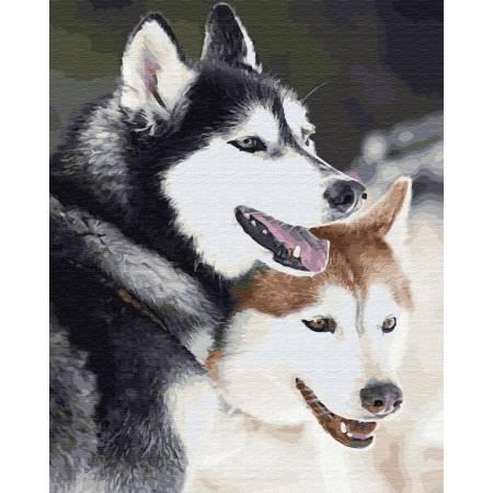Картина по номерам Собаки хаски GX28714, Rainbow Art