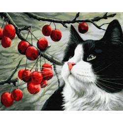 Кот и ягоды