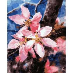 Цветения яблони