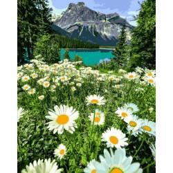 Ромашковое поле в Альпах