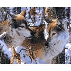Волчье верность