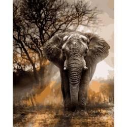 Слон в лучах заката